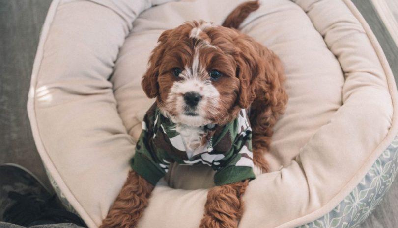 Find den bedste hundekurv eller hundeseng online